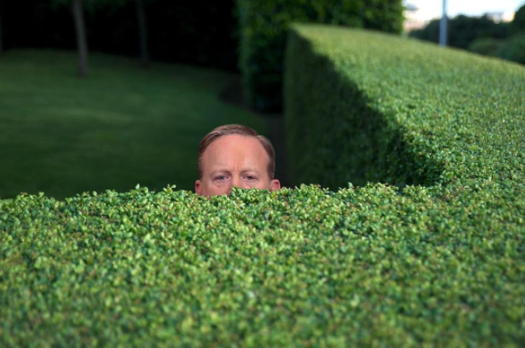 Spicey in the bushes  png - feel free to use - Democratic