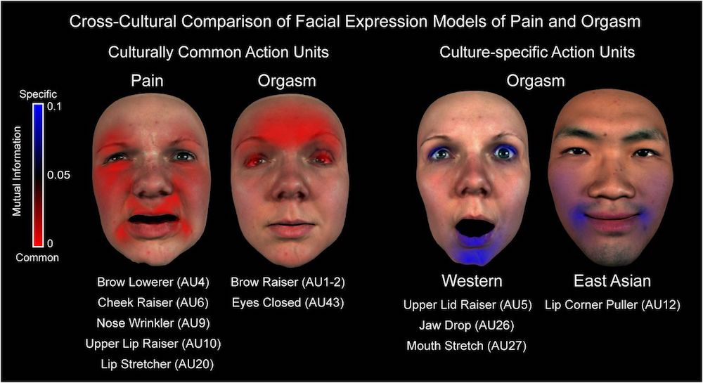 orgasm faces, pain study, University of Glasgow, o-faces