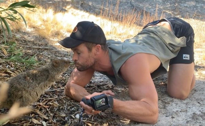 Chris Hemsworth shoots a video with a quokka