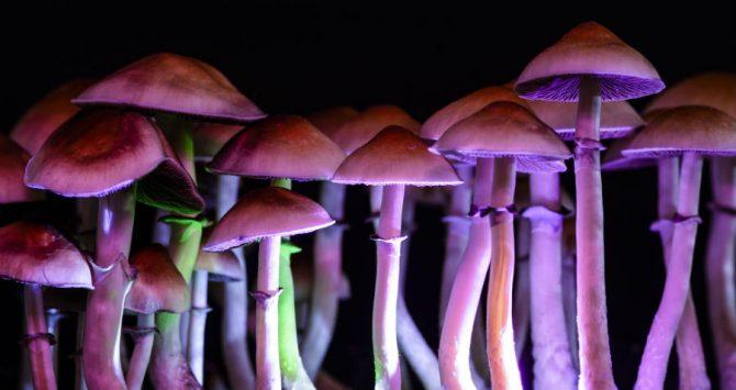 Magic mushroom - psilocybin