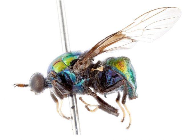 The RuPaul fly